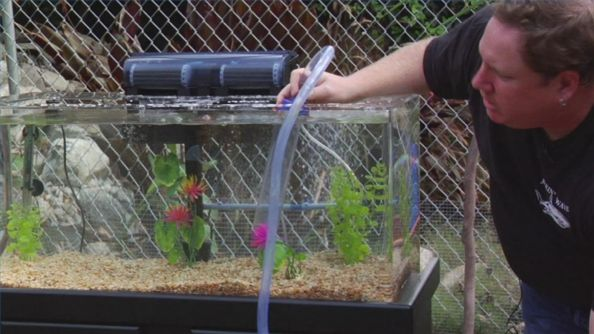 Cum sa alegi cel mai bun filtru de acvariu pentru pestele tau
