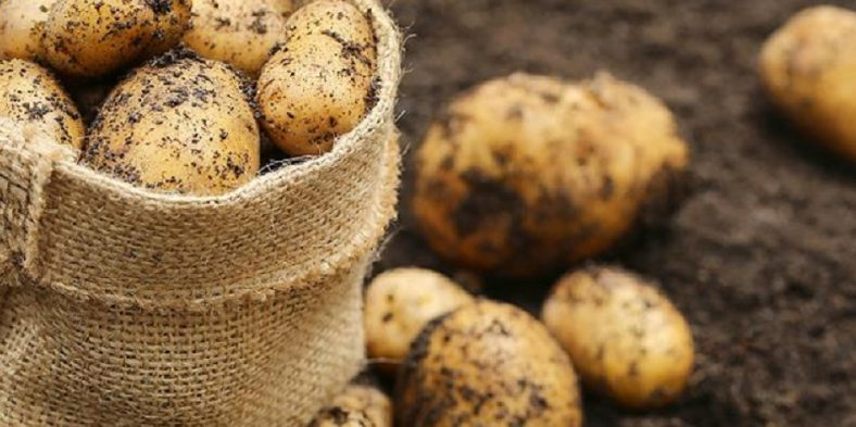 Ce beneficii ne ofera cartofii?