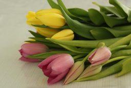 Floraria Divaflor te salveaza in situatiile neprevazute